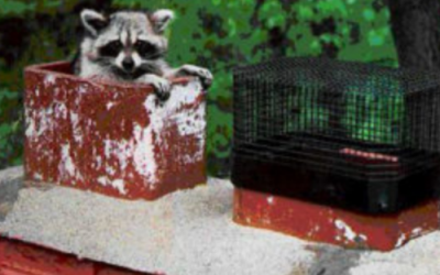 What To Do When There Is An Animal In Your Chimney