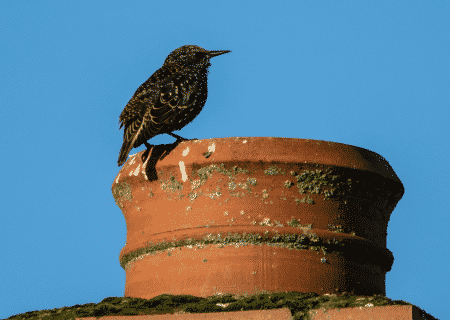 bird on chimney